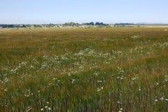 Byn är bak ett grönt fält Arkivfoto