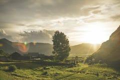 Byn med kor på solnedgången Royaltyfri Bild