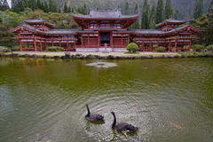Byodo-In Japanese Buddhist Temple. Japanese Buddhist temple by a pond with black swans swimming in foreground and mountains in back Royalty Free Stock Photo
