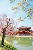 Byodo-no templo com a flor de cerejeira em Uji, Kyoto, Jap?o imagem de stock royalty free
