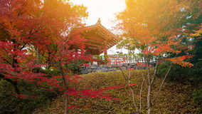 Byodo-in shrine with autumn maple, Uji Stock Images