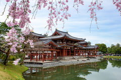 Byodo-in Temple in Uji, Kyoto, Japan during spring. Cherry bloss Stock Photo