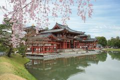 Byodo-in Temple in Uji, Kyoto, Japan during spring. Cherry bloss Royalty Free Stock Images