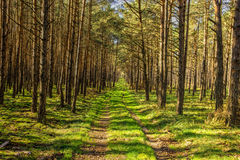 Bypath Through Dense Forest Stock Photography