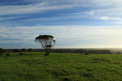 Byron Bay Farmland Royalty Free Stock Photos
