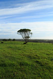 Byron Bay Farmland Stock Photos