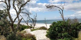 Byron Bay Shoreline royaltyfri bild