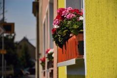 Bystrany, R?publique Tch?que - 23 mai 2019 : fleurs dans la fen?tre au centre du village au printemps photos libres de droits