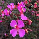 bystre kolorowe kwiaty Fotografia Stock
