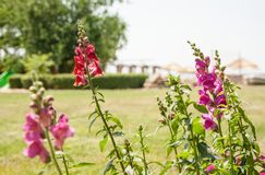 bystre kwiaty Zdjęcie Stock