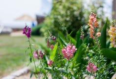 bystre kwiaty Obraz Stock