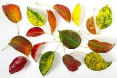 bystre liście jesienią fotografia stock