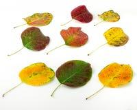 bystre liście jesienią obrazy stock