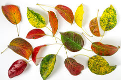 bystre liście jesienią zdjęcie stock