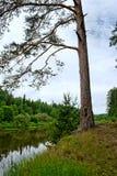 Bystritsa river Royalty Free Stock Photos