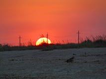 bystry słońca Zdjęcia Royalty Free