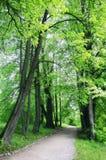 Byway na floresta fotografia de stock