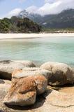 Byxan pekar, Flindersön, Tasmanien, Australien Royaltyfri Fotografi