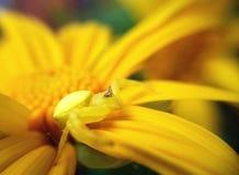 Bzdury pająk Fotografia Royalty Free