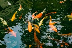 Bzdury ryba w ogródzie Zdjęcie Royalty Free