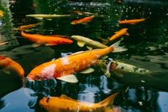 Bzdury ryba w ogródzie Fotografia Royalty Free
