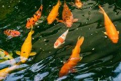 Bzdury ryba w ogródzie Zdjęcia Royalty Free