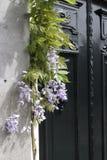 Bzy wokoło drzwi w wiośnie Fotografia Royalty Free