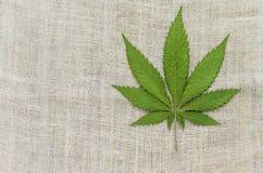 Cáñamo médico de la marijuana de la mala hierba Foto de archivo libre de regalías