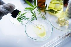 Cáñamo, marijuana, fotos de archivo libres de regalías