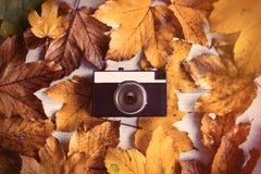 Cámara con las hojas de arce del otoño Imagen de archivo libre de regalías
