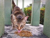 Cámara de Cat Licking Food Looking At del primer foto de archivo libre de regalías