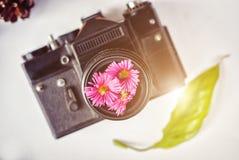 Cámara de la película del vintage, flores rosadas y película en el fondo blanco Fotos de archivo libres de regalías