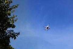 Cámara de los abejones con las ramas y el cielo azul Fotografía de archivo