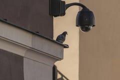 Cámara de seguridad de arriba del CCTV de la vigilancia Imagenes de archivo