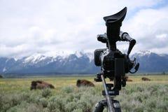Cámara de vídeo en el trípode con los tetons y el búfalo Fotografía de archivo libre de regalías