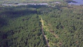 Cámara de visión aérea del bosque verde de los tops mezclados densos del árbol de árboles y de abedules de pino clip Visión aérea Fotografía de archivo libre de regalías