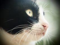 Cámara joven del gato, blanco y negro, del primer 9, de la suavidad y del agujerito Fotos de archivo