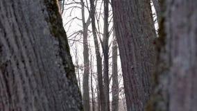 Cámara lenta: árboles deshojados contra la luz del sol con una toma panorámica lenta al derecho - puesta del sol en el otoño almacen de video