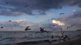 Cámara lenta con centenares de vuelo de la gaviota en la playa metrajes
