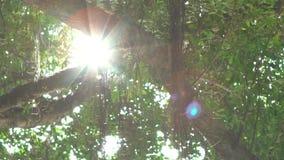 cámara lenta de la luz del sol a través de las hojas del árbol verde en la puesta del sol en Taipei almacen de video