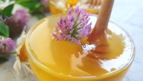 Cámara lenta de la miel del trébol fresco de la flor almacen de video