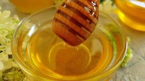 cámara lenta de la miel de la hortensia de la flor del fondo concreto gris fresco del producto natural metrajes