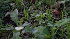 Cámara lenta de la serpiente lisa en arrastrarse de la hierba Exploración del piso del bosque almacen de metraje de vídeo