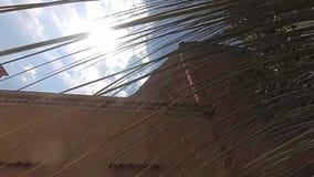 Cámara lenta de la sol que viene a través de hojas de palma almacen de metraje de vídeo