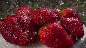 Cámara lenta de las frutas de las fresas que se lava