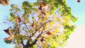 Cámara lenta de las hojas coloridas de la naturaleza de la temporada de otoño de las hojas de otoño almacen de metraje de vídeo