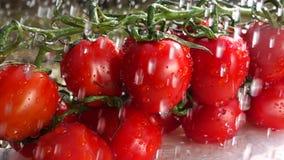 Cámara lenta de los tomates de cereza almacen de video