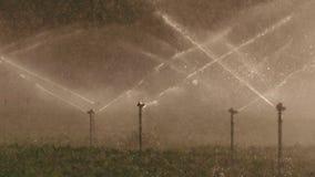 Cámara lenta de muchas regaderas del impacto que irrigan un campo durante puesta del sol almacen de metraje de vídeo
