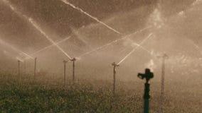Cámara lenta de muchas regaderas del impacto que irrigan un campo durante puesta del sol almacen de video