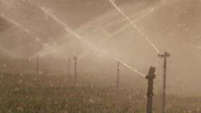 Cámara lenta de muchas regaderas del impacto que irrigan un campo durante puesta del sol metrajes